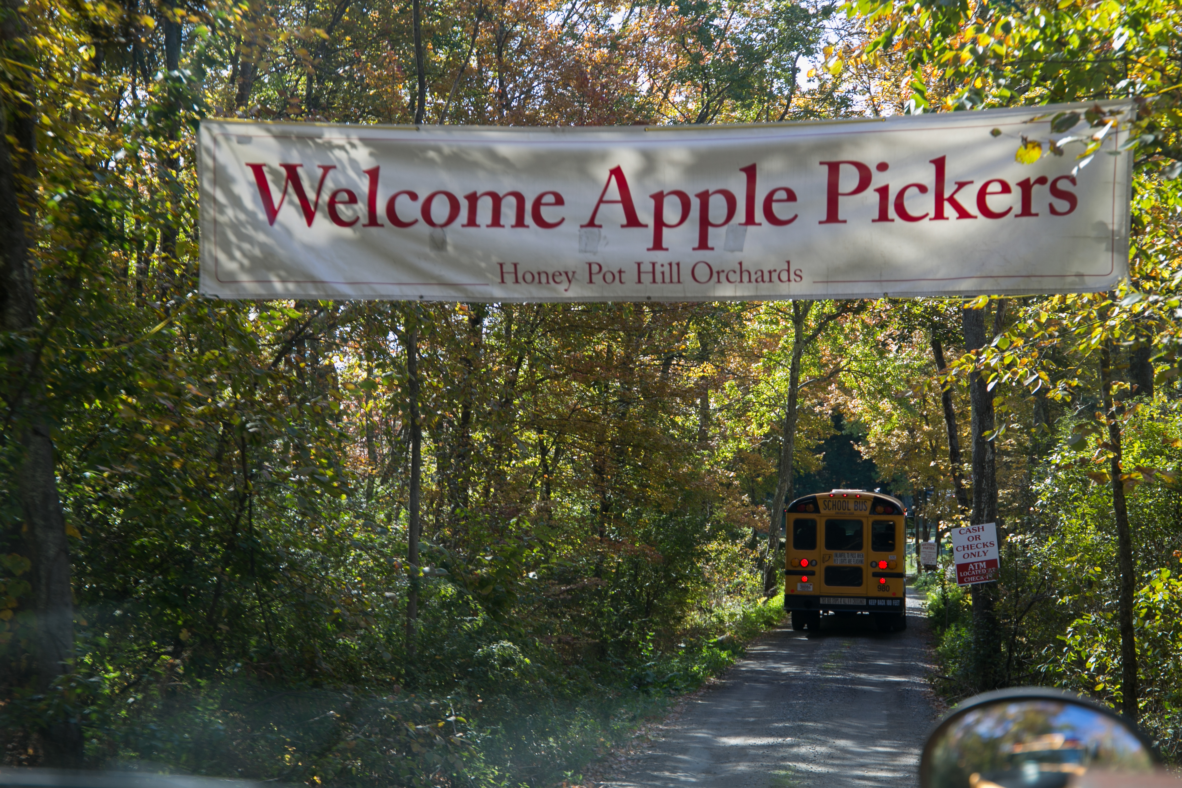 Boston University students were given the oppurtunity to get out of the city on Saturday, Oct. 15, for a day of apple picking, hay rides, fall foliage, and carmelized apples. Photo by Silvia Mazzocchin/BU News Service